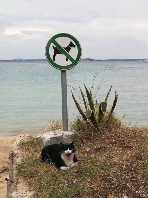 Picture of a beach path, with a 'no dogs' sign. On the ground in front of the sign is a cat that appears to be laughing uproariously.