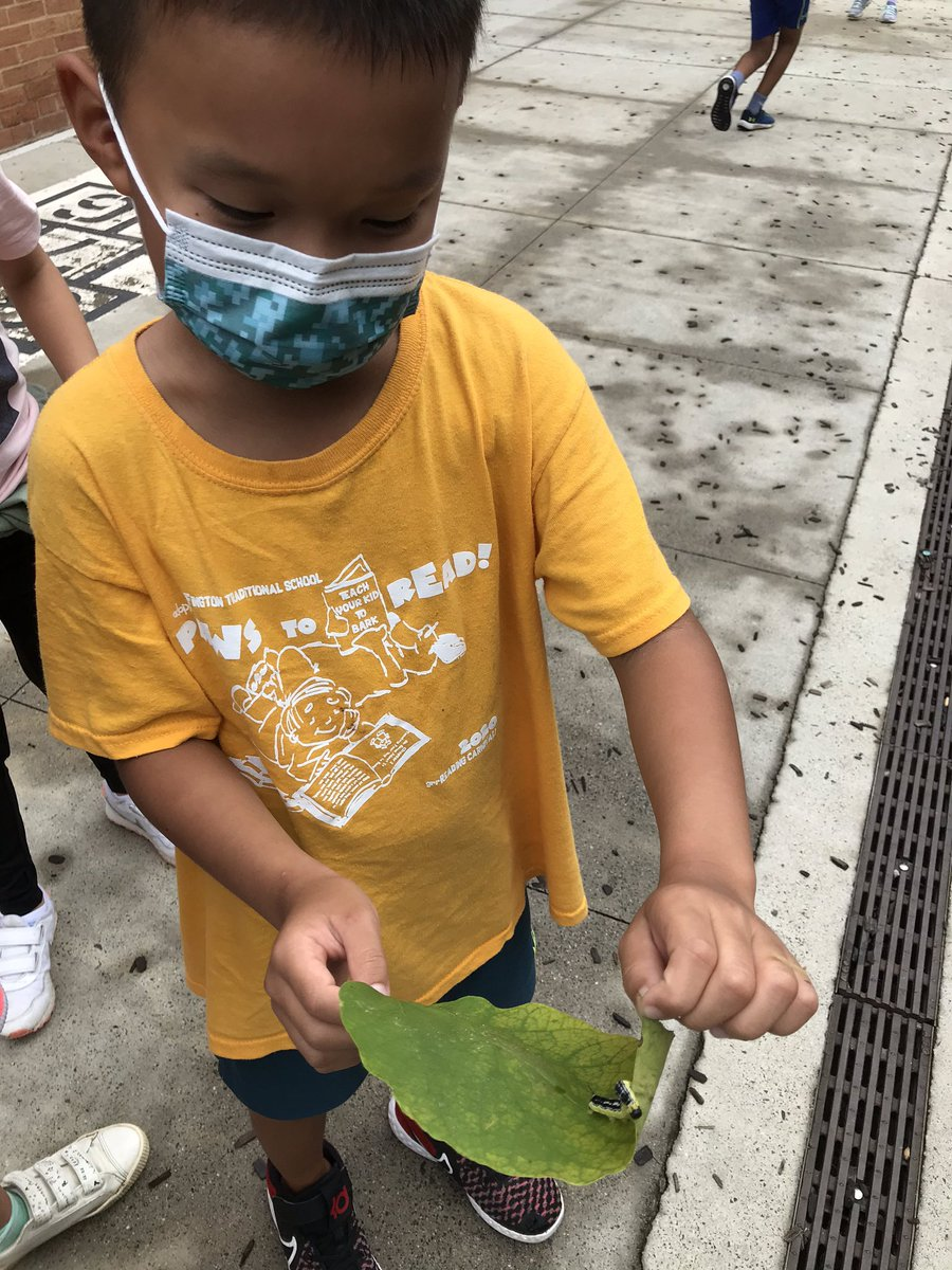 Check out our new caterpillar friend! <a target='_blank' href='https://t.co/d1UJLtcMac'>https://t.co/d1UJLtcMac</a>