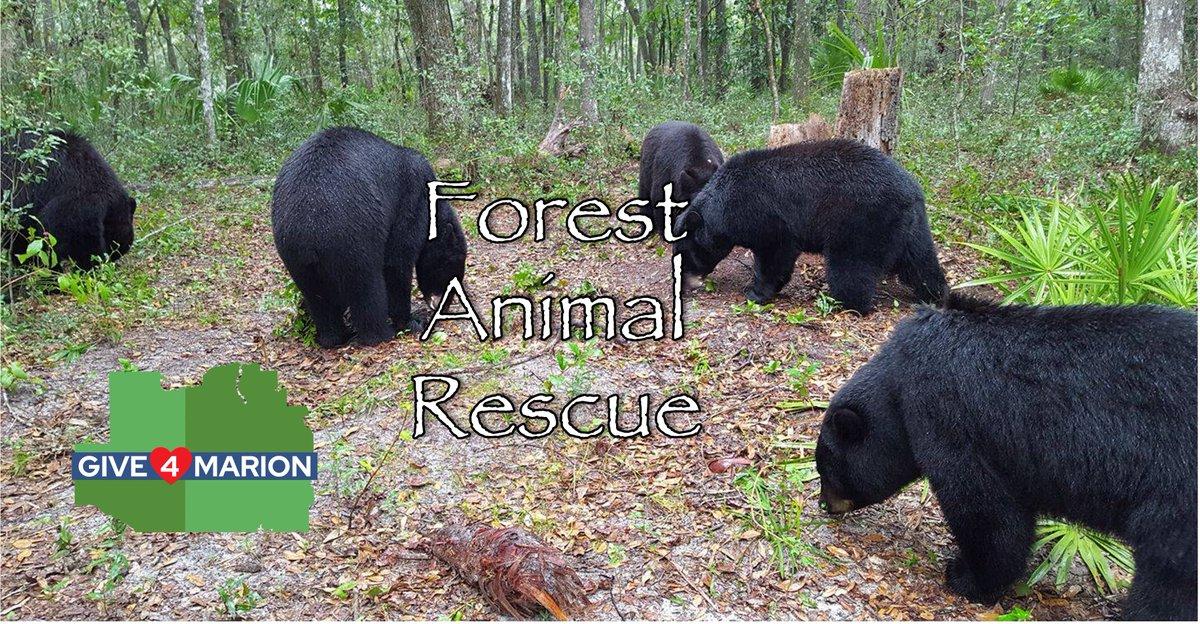 ForestAnimalRes photo