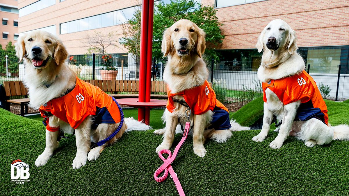 Blessing your timeline with these good #BroncosCountry 🐶's. Broncos host healthcare worker appreciation event at @ChildrensColo » j.mp/3tQtiov