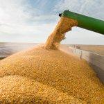 Image for the Tweet beginning: Feed weekly outlook: U.S. corn