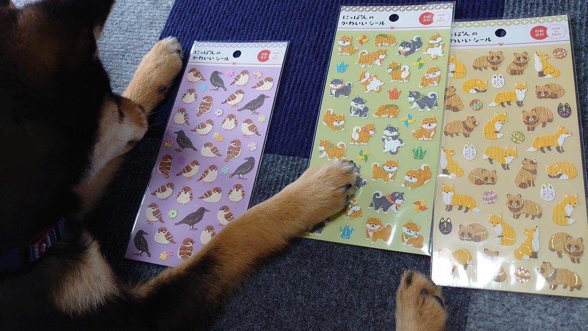 test ツイッターメディア - キャンドゥで❝にっぽんのかわいいシール❞GET😆 全部私の好みの動物さんたち🤤 れんくんはスズメさん、カラスさんが好きみたいです🥺 #黒柴 #れん #子犬のいる暮らし  #犬 #Dog #いぬのいる暮らし #柴犬のいる暮らし #柴犬のいる幸せ #柴犬大好き #にっぽんのかわいいシール #和紙素材 #キャンドゥ https://t.co/rruqwwUQOi
