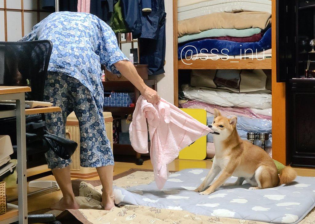 今日の父VS犬