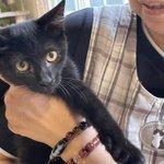 Image for the Tweet beginning: .  🌸ポポくん 🌸ジジちゃん 卒業しました!  里親さんと一緒にたくさん幸せになってね😊💓  ありがとう🍀*゜  . #保護猫 #秩父 #秩父市 #猫のいる幸せ #保護猫を家族に