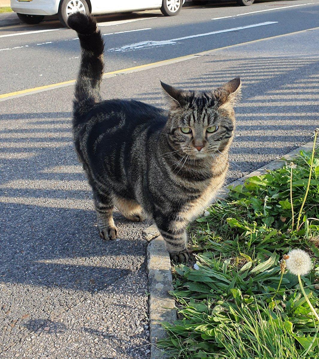 @LolaLegged's photo on #Caturday
