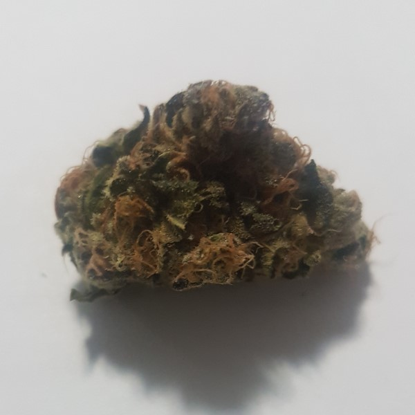 cannabistest1: Mr. Big Stuff !!!!!!!!! Highest Measured Values Total THC 14.98% Total CBD <0.02% Total CBG 0.36% #cannabissociety #moonbeam #samples #sale #machine #thc #cbdproducts #fruitypebbles #cannagrowers #Vancouver #Calgary #cannabisculture #cannabisindustry #hplc #canada #australia #USA