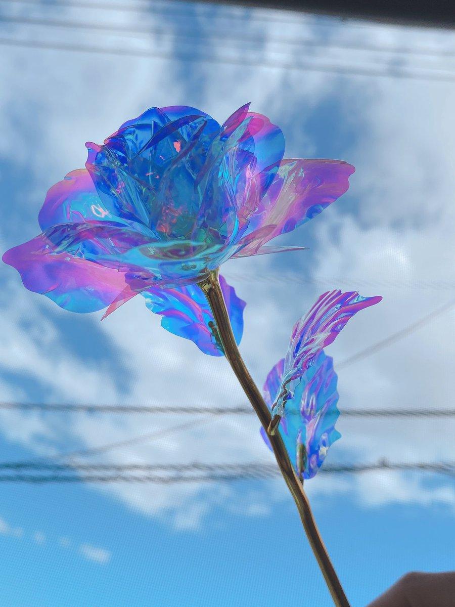 test ツイッターメディア - Seriaで可愛いお花見つけた🥺❤️ オーロラローズ🌹 光に当たると綺麗! #seria #セリア #Seria https://t.co/7C7lYdYhoE