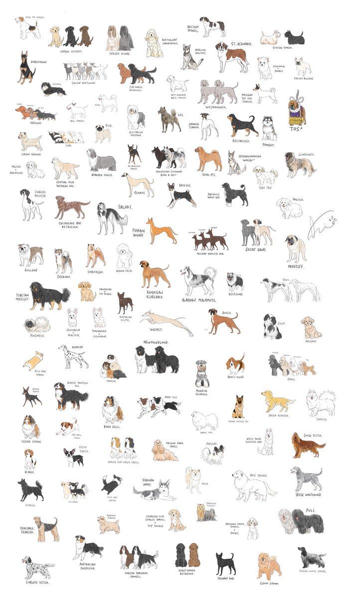 誕生日プレゼントに、111種のゆるい犬たちをRTして貰えませんか🐾…?