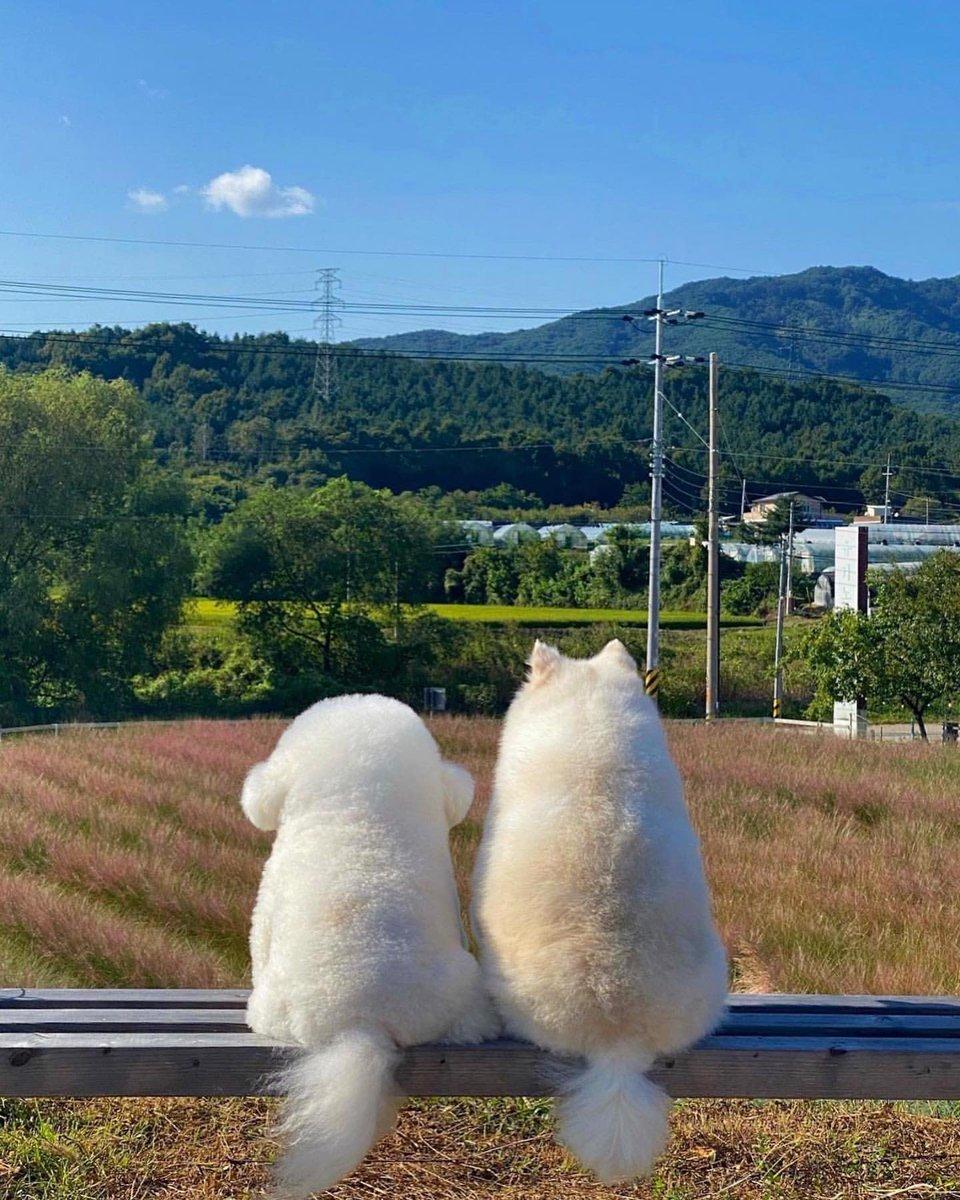 韓国在住アランさんとそのお友達ポメさんの後ろ姿が狂おしいほど良い。📷