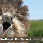 Did you know the Bittern's favourite food is another threatened species - Southern Bell Frogs?! 🐸🐸🐸Just one of the fascinating things you can discover at the Bittern Summit in Leeton 1-4 Feb 2022. Sign up for updates here: https://t.co/LvOB4VJ1EP #BringingBackTheBunyipBird