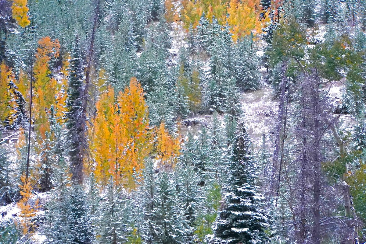 Can't Pass It Up. Fall leaves and fresh snow on Ute Pass in Grand County. #9News #9wx