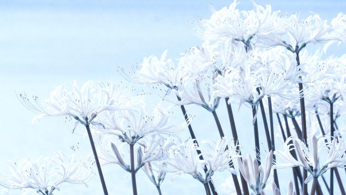 雪のような花でした。
