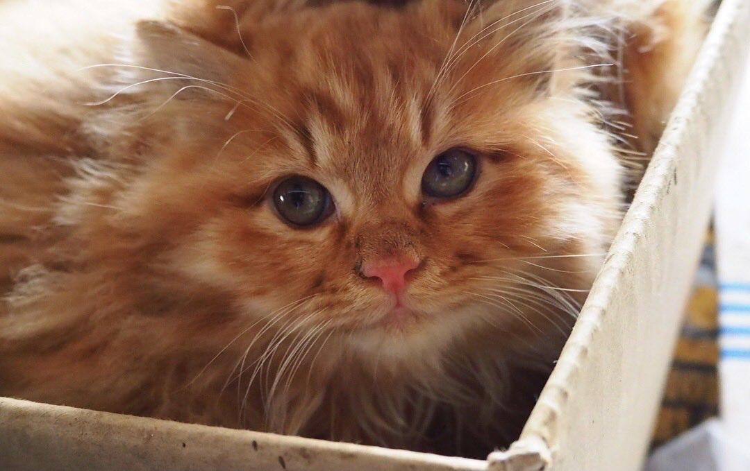 9月24日「劇場版 世界ネコ歩き あるがままに、水と大地のネコ家族」DVDが発売されます。Twitterだけの初公開、子ネコ時代のカーショ。りっ…立派な大人になりました(笑)。初めて会った日が、昨日のことのようです。