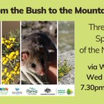 Get in quick to register for Wed night's webinar at https://t.co/C6QaseFJkO. Hear from and ask experts about the Mountain Pygmy-possum and the Regent honeyeater, two NE threatened species. Their recovery is funded by @envirogov and @AusLandcare. Flyer at https://t.co/o5pr4OTjv0.