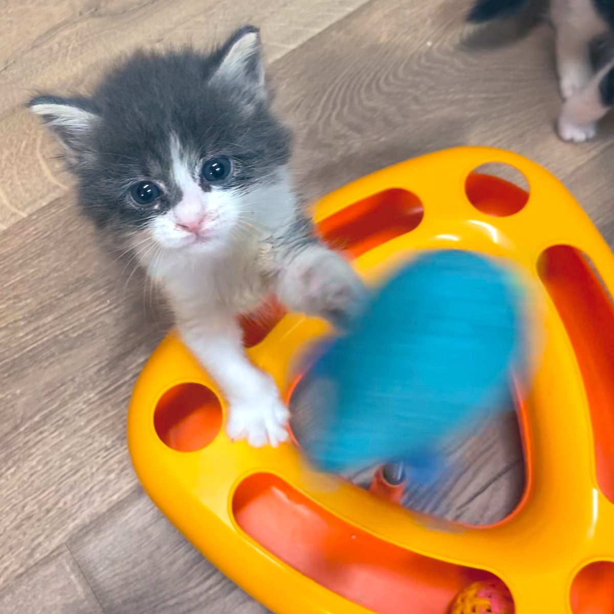 This thing is COOL! #TedLasso #kittens #CatsOfTwitter #MondayMotivation
