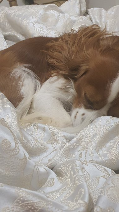 My dog fell asleep whilst I read him a bedtime story, don't dare tell me he's not a real baby. ❤️🐶 https://t