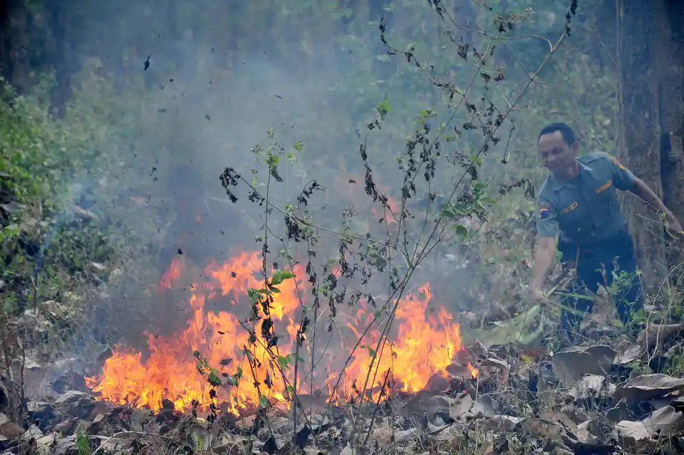 Stop blaming traditional farmers for #forestfires in Indonesia!  Help the farmers with sustainable #paludiculture instead, and rewet the massive peatland which has been drained by corporations. theconversation.com/kebakaran-huta… Wet peat won't burn.
