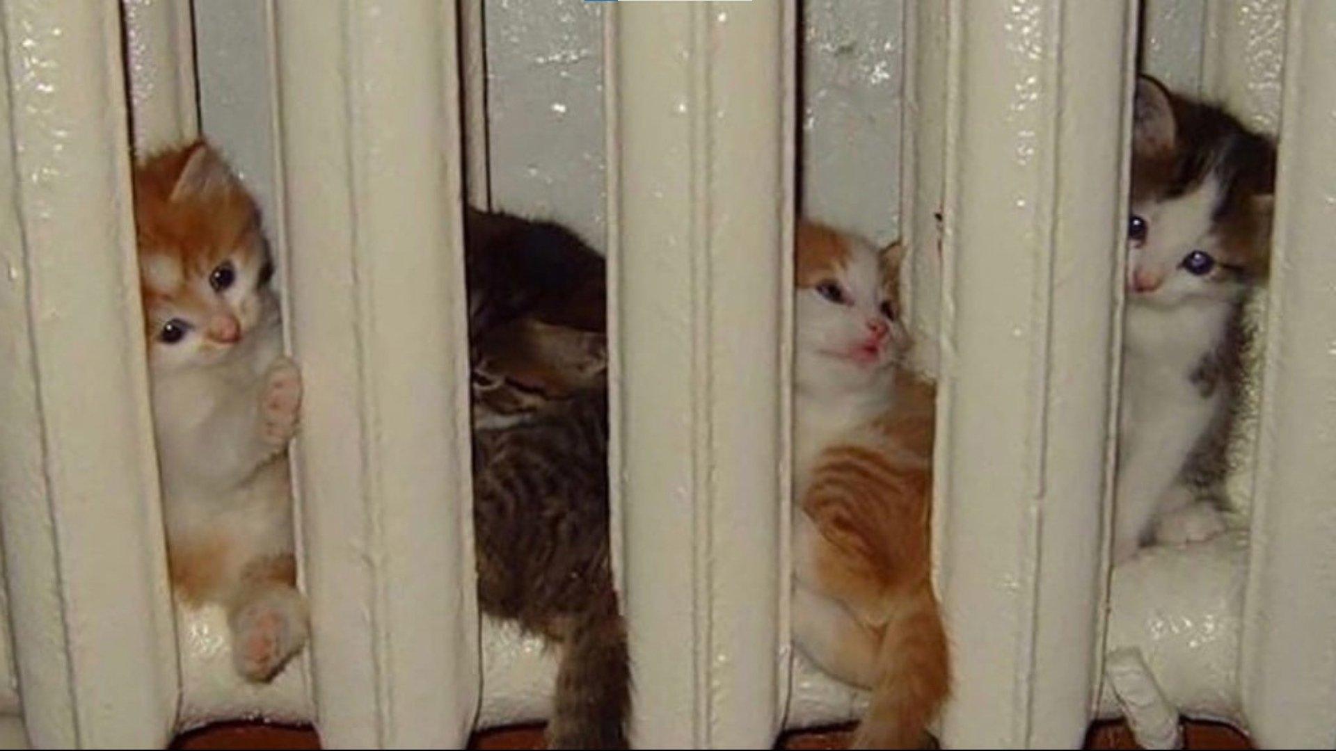 Коты в системе ЖКХ или Коты котельной помогают!