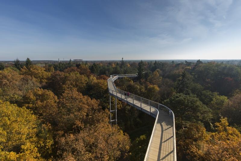 """Spaziergang mit Aussicht: der Baunmkronenpfad """"Baum & Zeit """" in Beelitz Heilstätten im Fläming. Mehr hier 👉https://t.co/HGW6hxq8F2 #nachbrandenburg https://t.co/rOaVEb9eHM"""