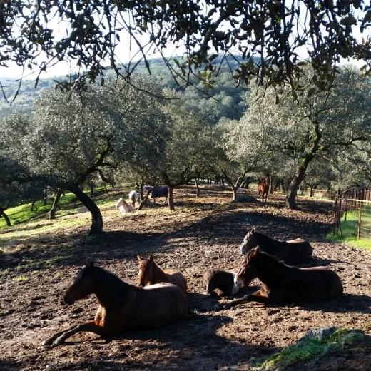 ADV; Stichting Paard in nood Spanje zoekt donateurs https://t.co/Z2TIKi5p7Z https://t.co/kXWhBV0UIP