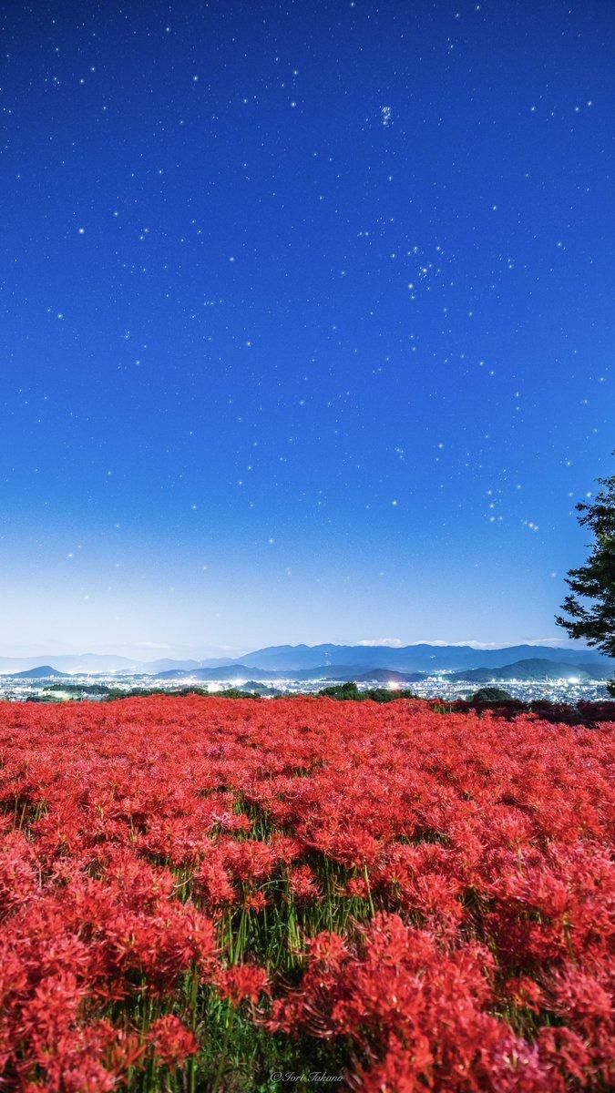 星空の下で燃えるように咲く彼岸花が絶景過ぎた。