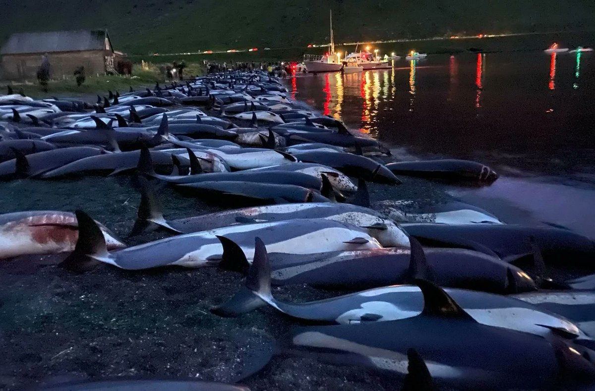 Entire pod of 1428 dolphins wiped out!!! Please everyone get behind this important petition to #BoycottFaroeIslands: Suspend trade agreement with #FaroeIslands until all whale & dolphin hunts end petition.parliament.uk/petitions/5971…