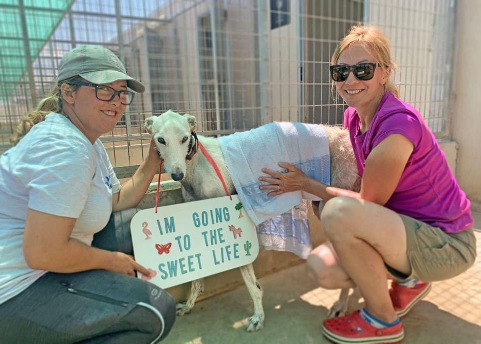 Saturday Sweet Life🌟🌟🌟Today 3 lucky dogs left for Belgium🥰We said goodbye to UFO (unidentified fluffy object🙈😂), Cayetana & Bolt❤️We are so grateful to see our dogs find new families where they will be loved & never be abandoned again❤️From Street Life to Sweet Life❤️❤️❤️