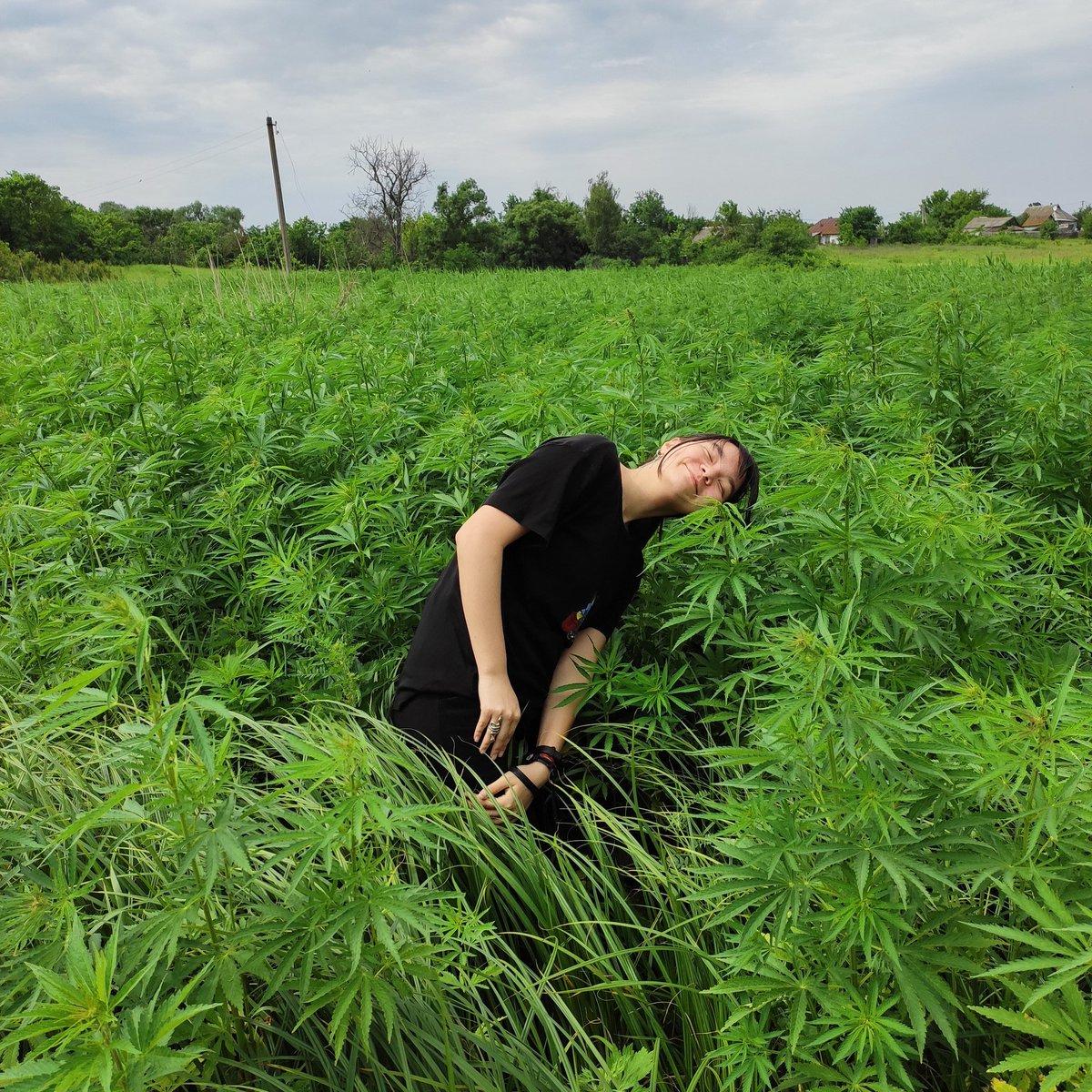 Выйду в поле конопли марихуана плюсы минусы