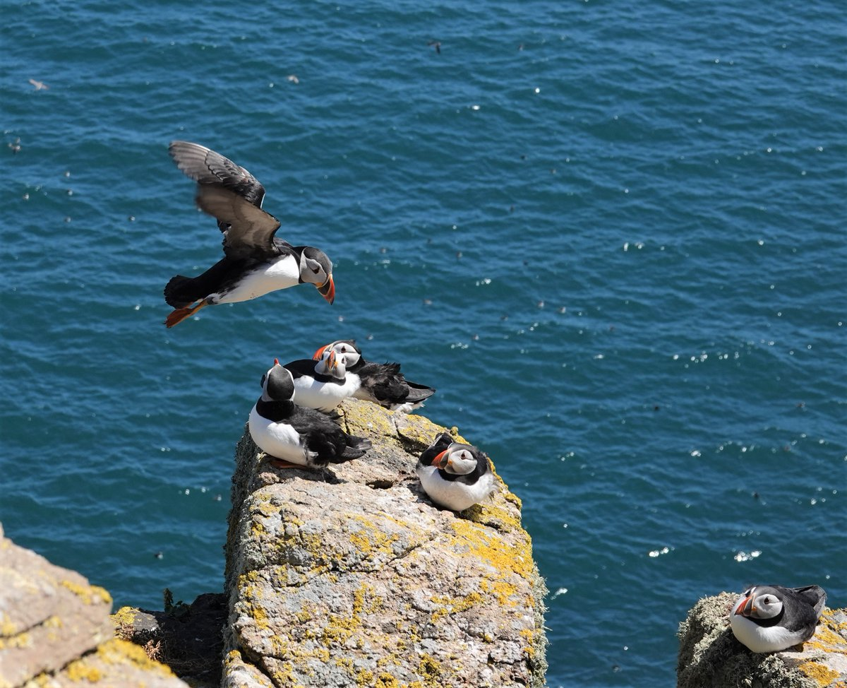 'I told you not to land Puffin!' :)