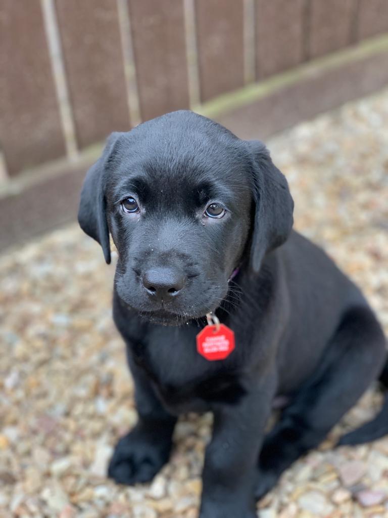 #fridaypuppyfix Benjy has got the puppy dog eyes down to a tee!