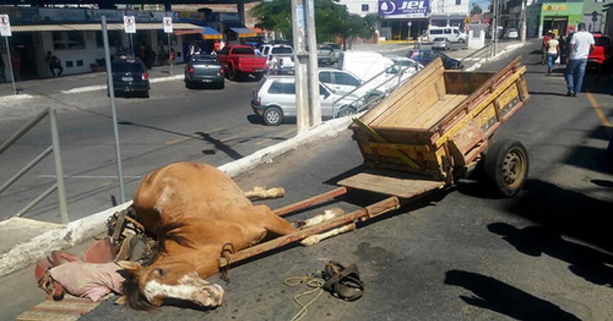 Prohibir el uso de tracción animal! #DerechoAnimal ▶ https://t.co/EksAX2hTRQ https://t.co/bZEaMxHJxT
