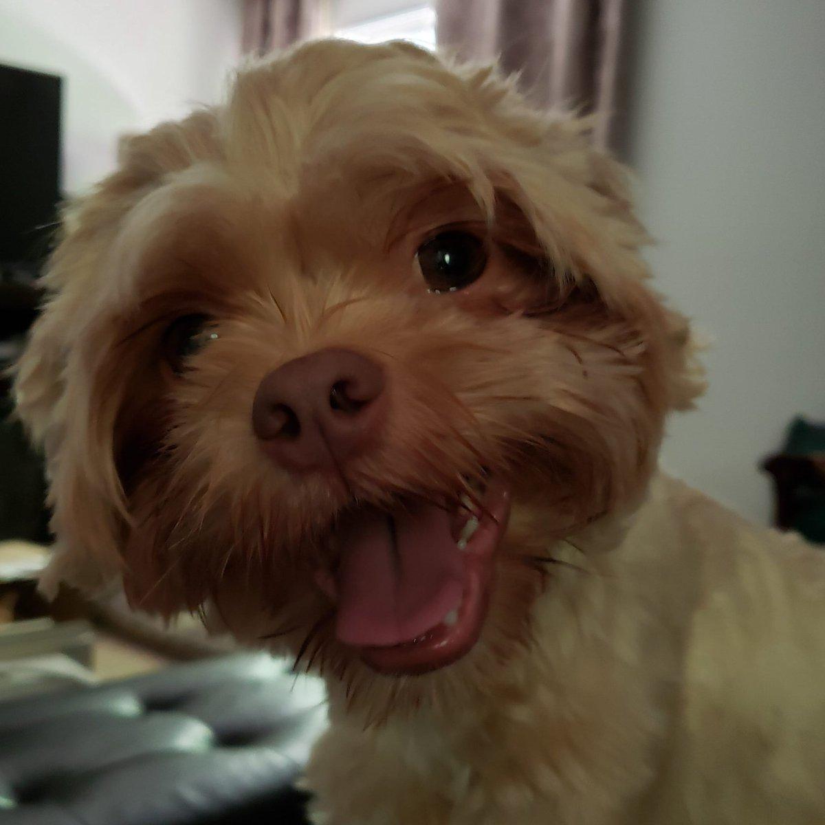 Joey's always such a happy boy #dog #muppetdog #happydog #smilingdog #dogsmiling #dogfaces #doglooks #dogsarelove #dogsarefamilypic.twitter.com/bssqkkXfyo