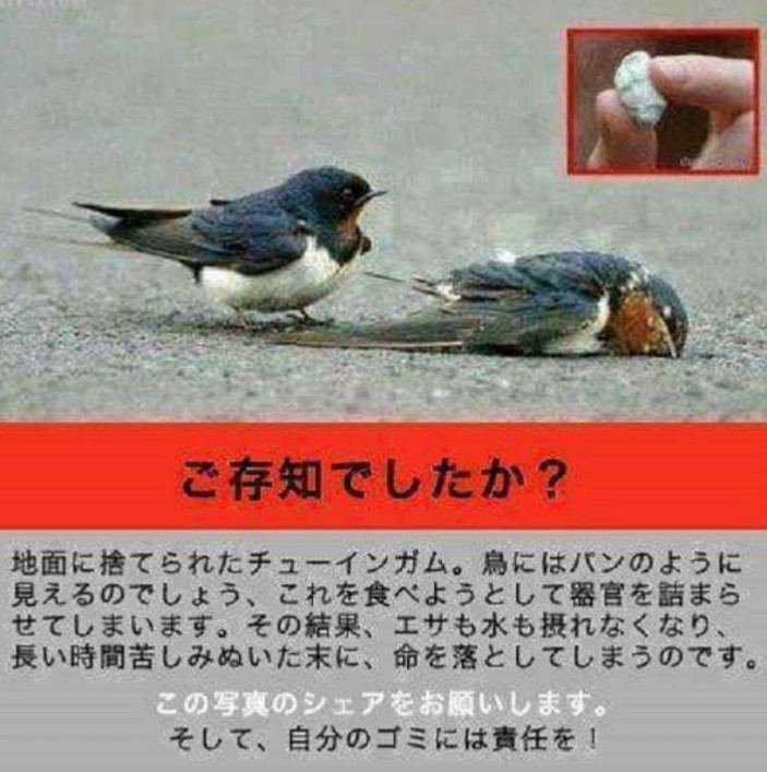 「危険」ガムのポイ捨てやめましょう!鳥に与える影響。