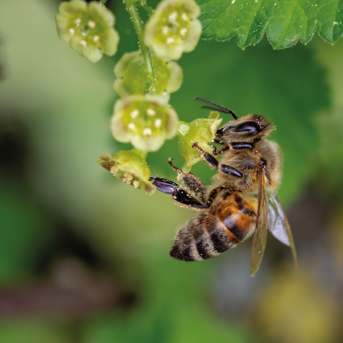 Did you know, for honey to be classified as organic, by @OrganicUK and @SoilAssociation, the hives must be placed in an area, surrounded by 100% organic plants, that stretches at least twelve kilometres in any direction.⁠ #WakeUpToOrganic <br>http://pic.twitter.com/CjfAxv0eyT