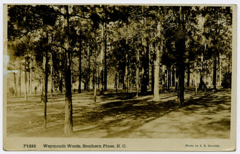 Weymouth Woods Sandhills Nature Preserve in Moore County is a preserve of long leaf pine forests and many rare plants and wildlife. Some of the pines have stood for hundreds of years, the oldest going back to 1548. #VacationNC https://t.co/TsbYfm7nXY https://t.co/aYCKXS2TUT