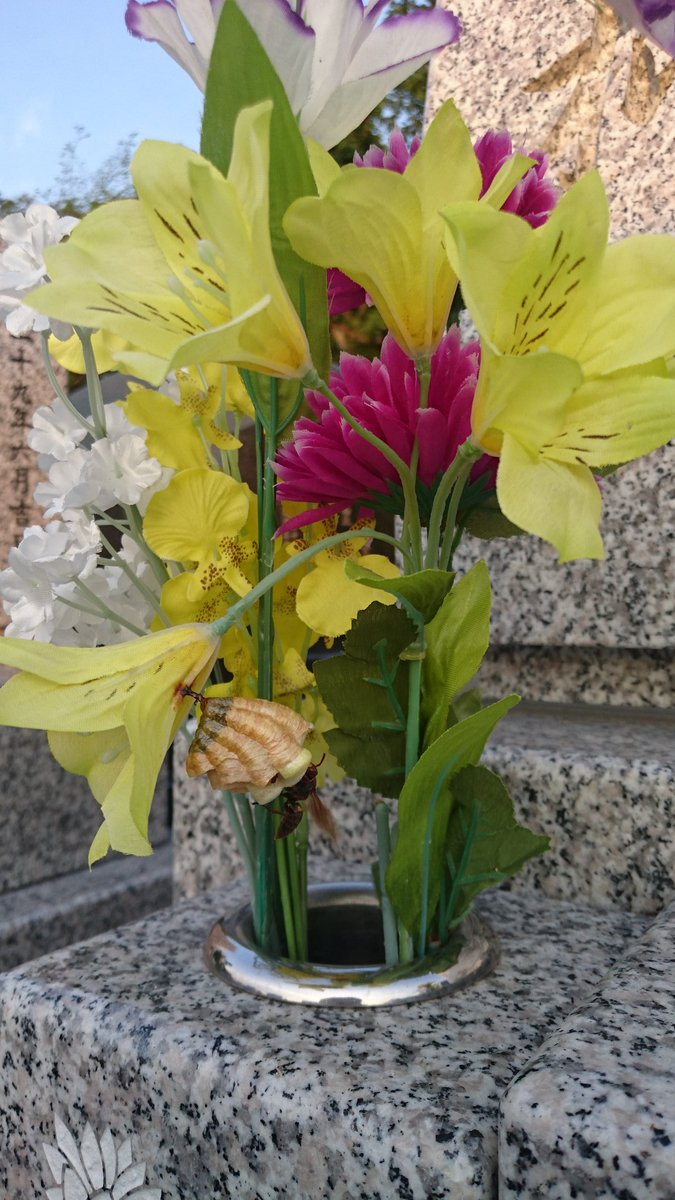 隣のお墓は綺麗なお花を飾ってるなぁと思ったら造花で、蜂が巣を作ってた。