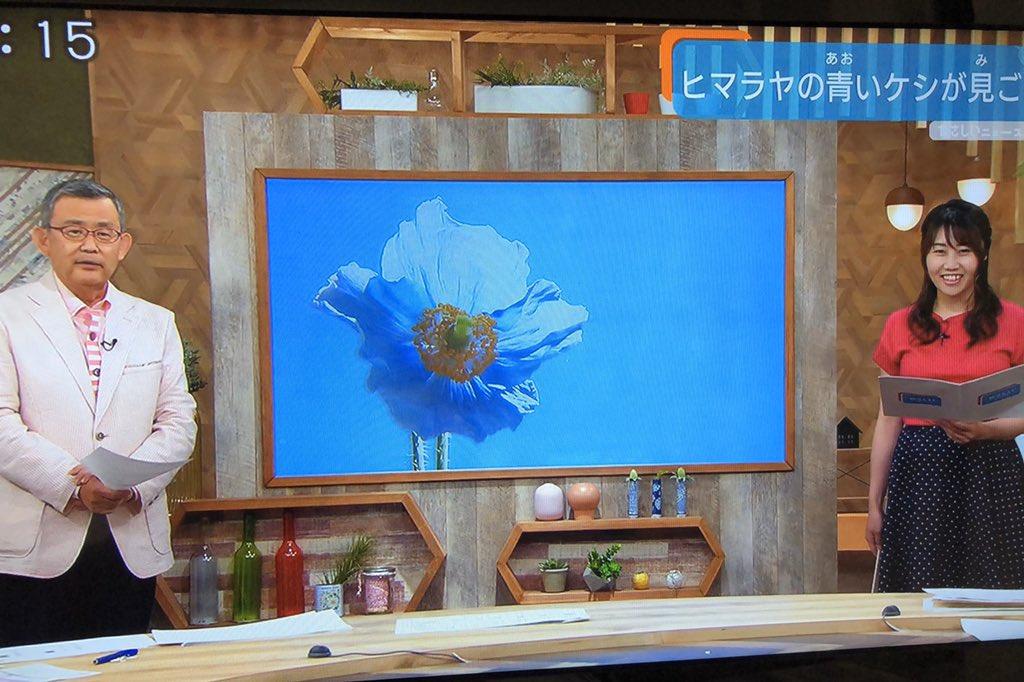 美しすぎるブルー✨ヒマラヤの青いケシ 元々標高3000メートル以上のヒマラヤの奥地にしか咲かないので、 「高嶺の花」や「幻の花」とも呼ばれているそう✨✨  #幻の花 #高嶺の花 #ヒマラヤの青いケシ #ブルーポピー    #神戸市 #六甲高山植物園 #テレビ大阪 #やさしいニュース #気象予報士 https://t.co/rXAWA7f6mC
