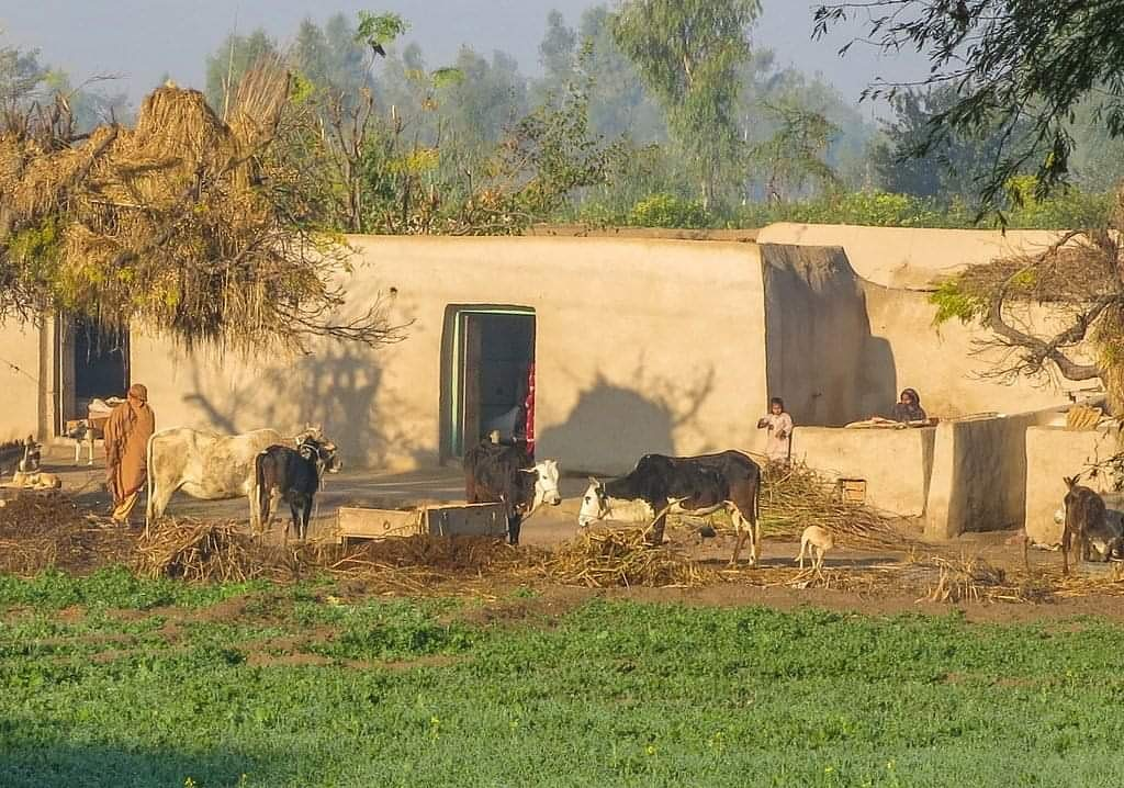 Some where in rural punjab! #pakistanpics #pakistaniwedding #pakistanifood #pakistanicouture #travelphotography #treavormoontribe #explorepakistan #explore #naturephotography #naturalallergyrelief #naturepic.twitter.com/GftDRhNBea