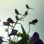 小鳥がとまっているように見える草がめっちゃエモイ