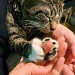 指を柔らかく握ったまま眠ってしまった猫。癒しをありがとうございます!w