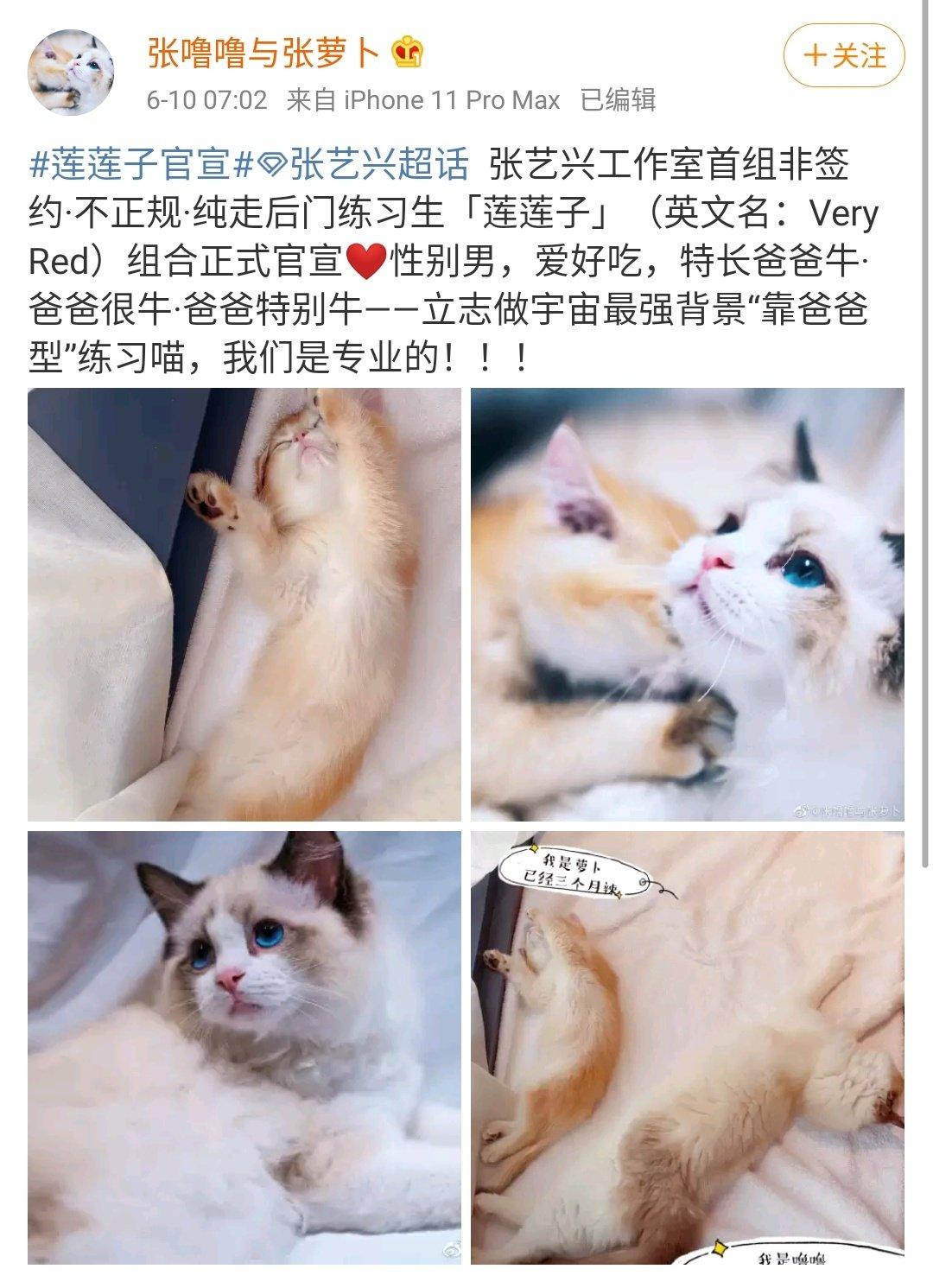 Ë©œë¦¬ì'¬ Ņ Rest در توییتر Lay Studio Membuka Akun Weibo Untuk Kucing Yixing Keluarga Baru Dalam Exo Pet Nama Kucing Pict 3 Adalah Zhang Luobo Berusia 3 Bulan Dan Zhang