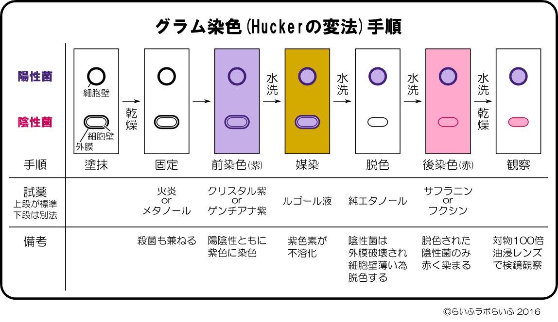 染色 グラム