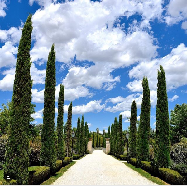We can't wait to see you walk down our cypress path again on July 1st. Until then, let your mind wander through our gardens⁠, smelling the spring flowers along the way 💐⁠🌿⁠ ⁠ ✨⁠ #Toscana #BorgoSantoPietro  ⁠https://t.co/uRfYftGYpk https://t.co/0gaHTAtT9C