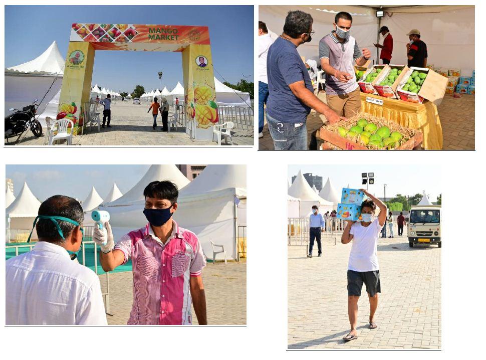 6 lakh kg mangoes worth Rs. 4.5 crore sold at Mango Market: AMC