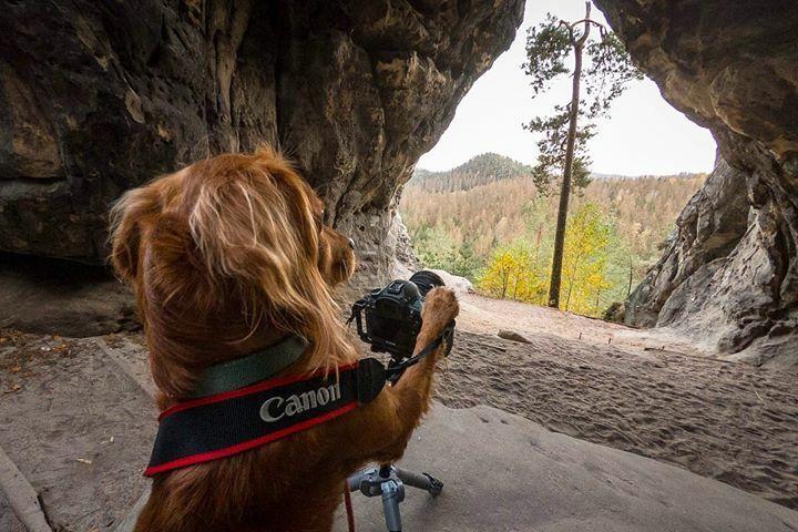 Off to take some photos this weekend. Happy Friday, folks! • • • • • #dogsofinstagram #hikingdogsofinstagram #hikingdogsofinsta #hikingwithdogs #explorewithdogs #dogsthathike #dogsonadventures #thegreatoutdogs #backcountrypaws #mountainlife #adventurewithdogs #adventured…pic.twitter.com/XyPKK7x2RL