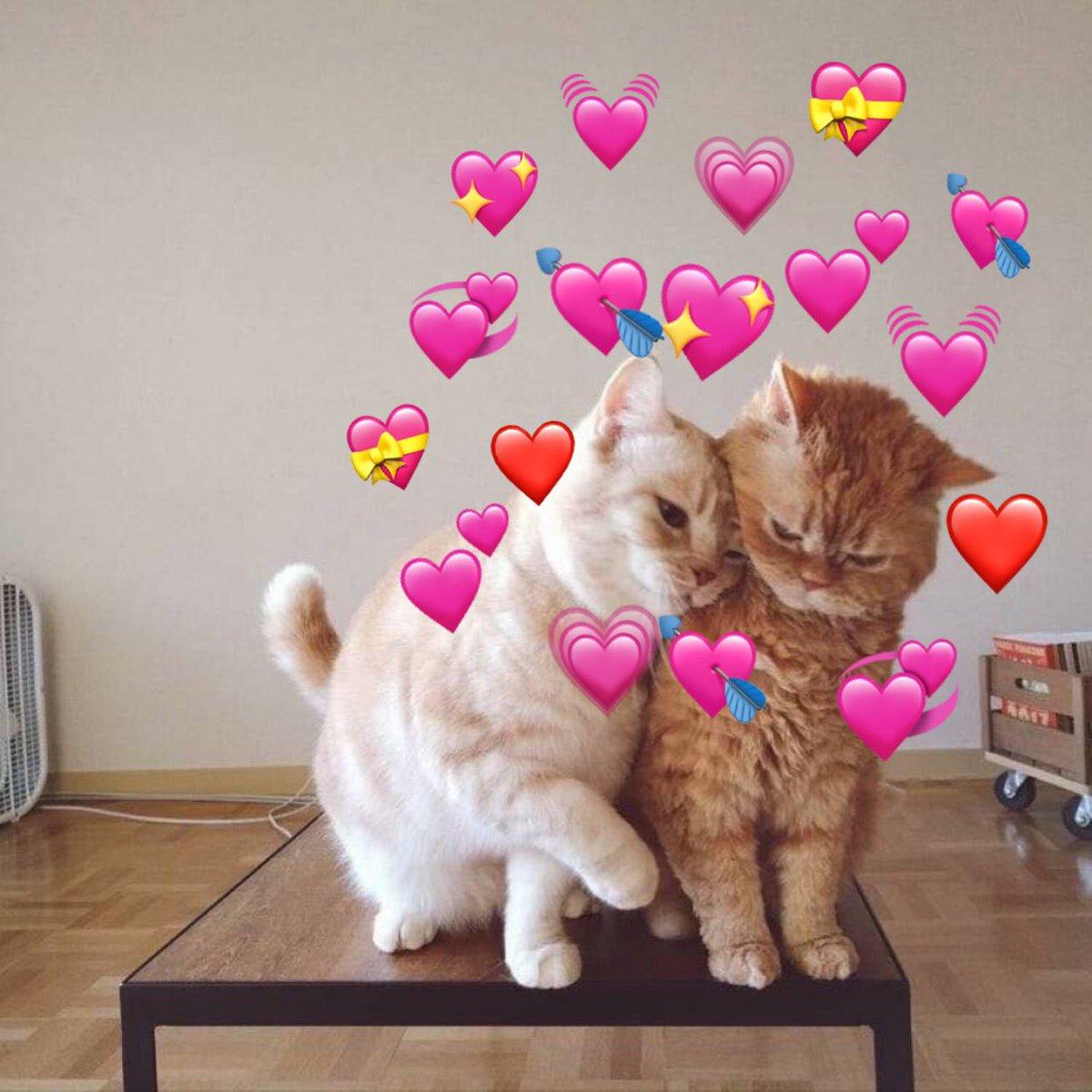 Котик я тебя люблю картинки сердцем