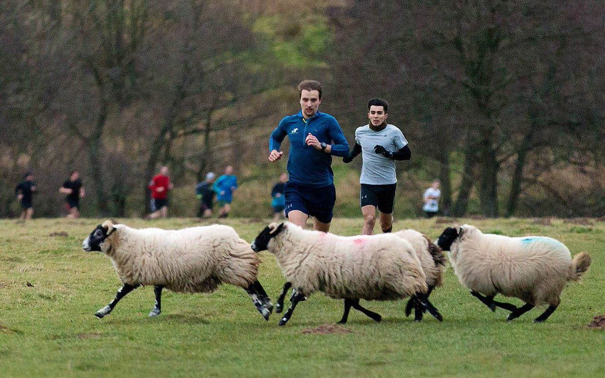 It's time for another caption competition 📸  Give us your best (and worst) captions for this parkrun pic!  ___________________________  🌳 #loveparkrun https://t.co/CiFbihIBbL