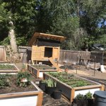 Image for the Tweet beginning: Little farm in the city...progress