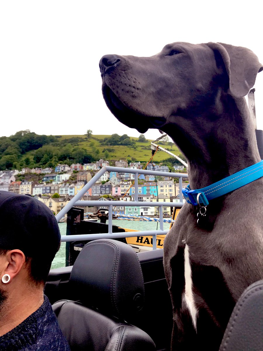 Buddy enjoying the Dartmouth to Kingswear ferry. #giantdog pic.twitter.com/jgytMGgxaA