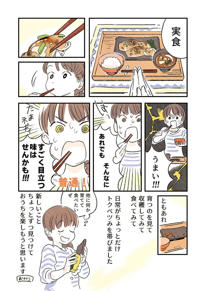 おうちにステェイ…中にたまねぎを再生(?)して食べてみた漫画です。